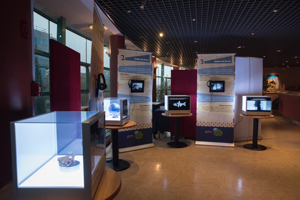 Exposition Evolution vitrine réalitée augmentée (crédit photo : Angélique Gilson)