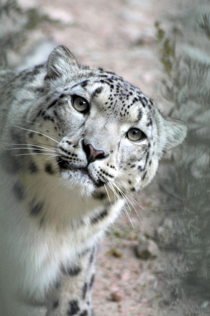 ©OSI-Panthera